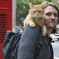 Um Gato de Rua Chamado Bob, por James Bowen